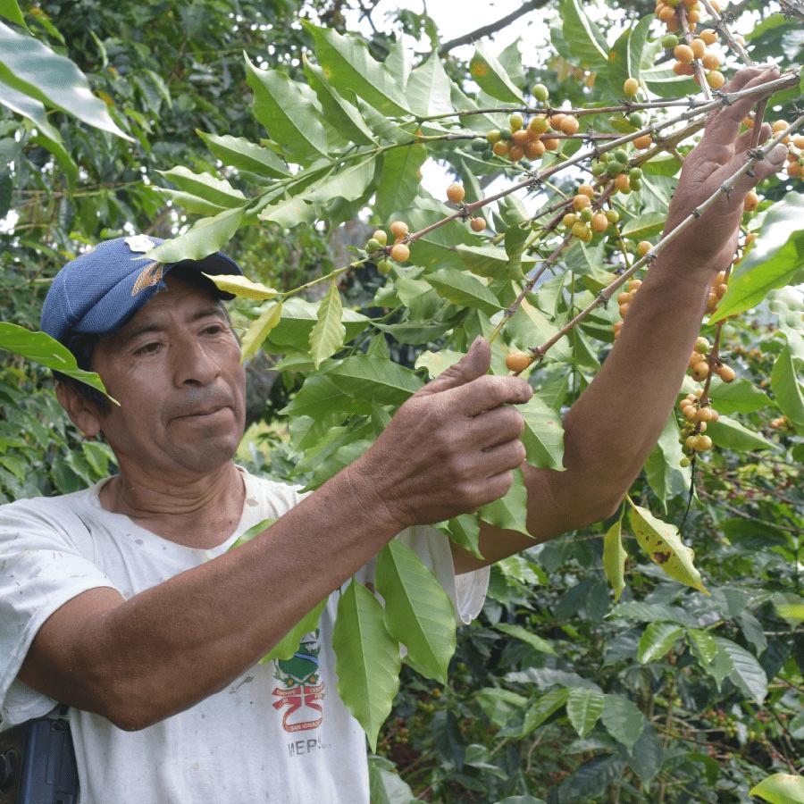 caficultores-cafe-yakumama